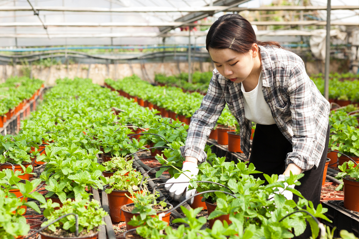 Recruitment For Forest Nursery Worker In Canada