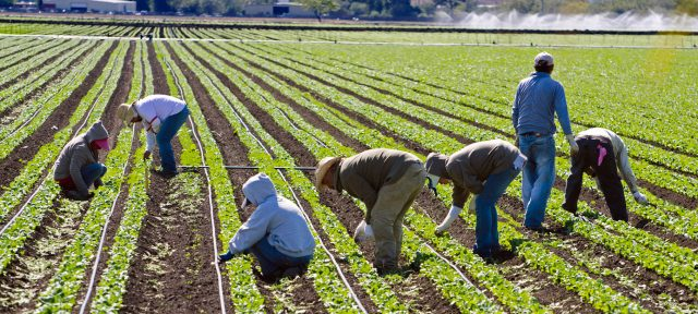 Recruitment For Harvester Job In Canada