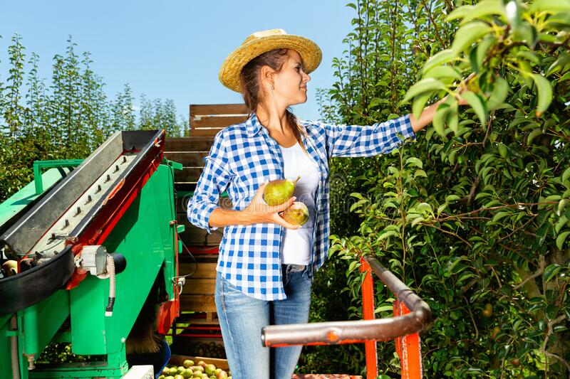 Recruitment For Orchard Worker In Canada
